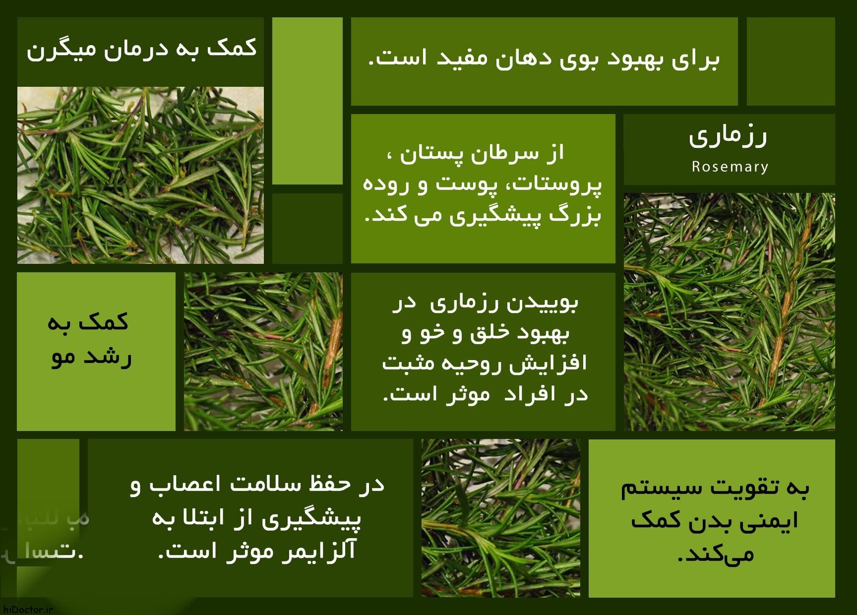 گیاه رزماری یا اکلیل کوهی