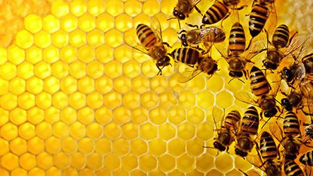 راه های تشخیص عسل طبیعی +خواص عسل Honey خاصیت دارویی عسل