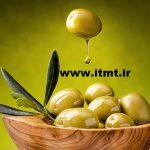 خواص زیتون در طب سنتی Olive
