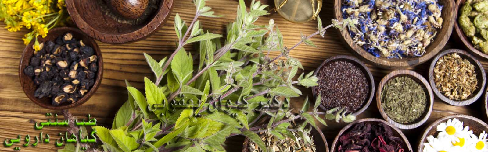 گیاهان دارویی زالو درمانی طب سنتی حجامت طب سوزنی دکتر یعقوبی